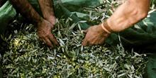 huile olive grecque olios