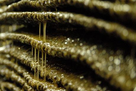 olios huile olive pression grece