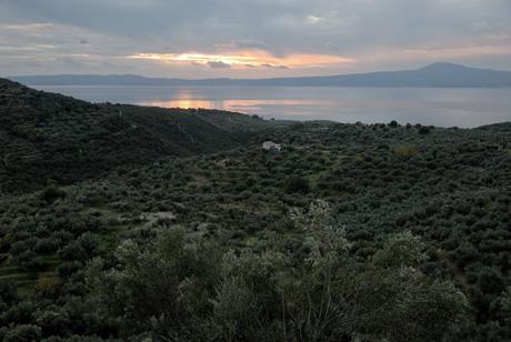 kalamata grece origine olios
