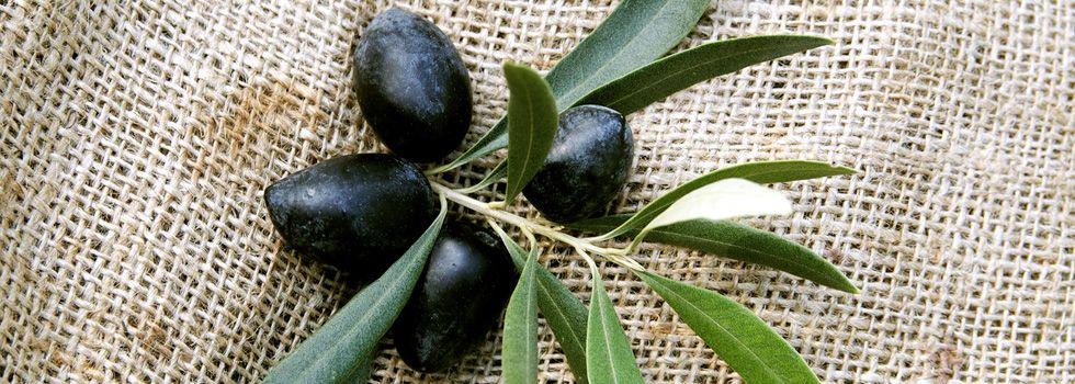 olive-koroneiki