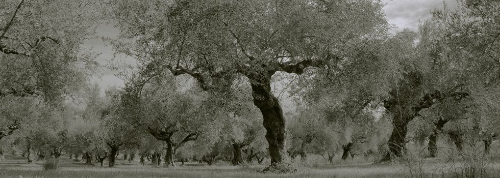 oliviers grece