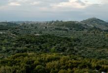 paysage-olios-3